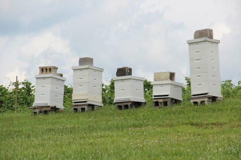 The garden also produces honey from these bee hives.